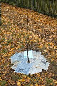 Sadzenie drzewka 1