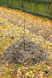 Sadzenie drzewka 2